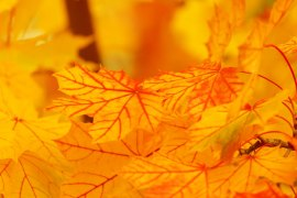 bright-yellow-leaves